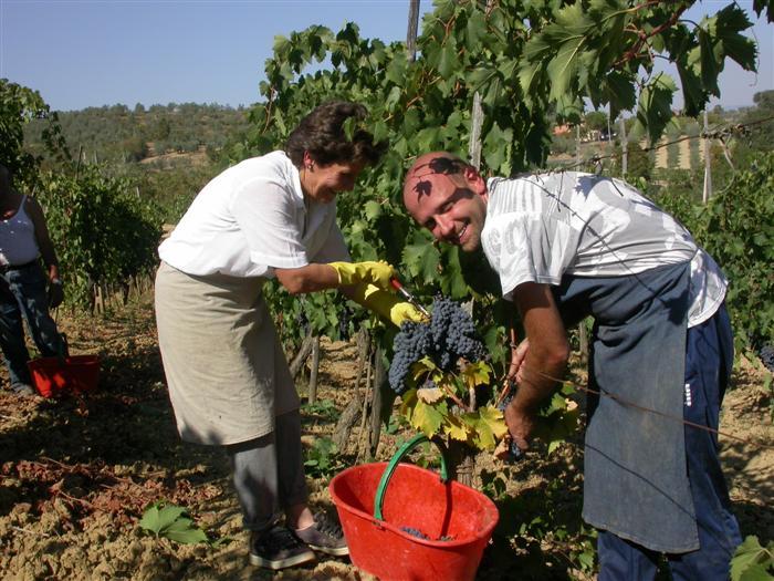 Le Berne Harvest