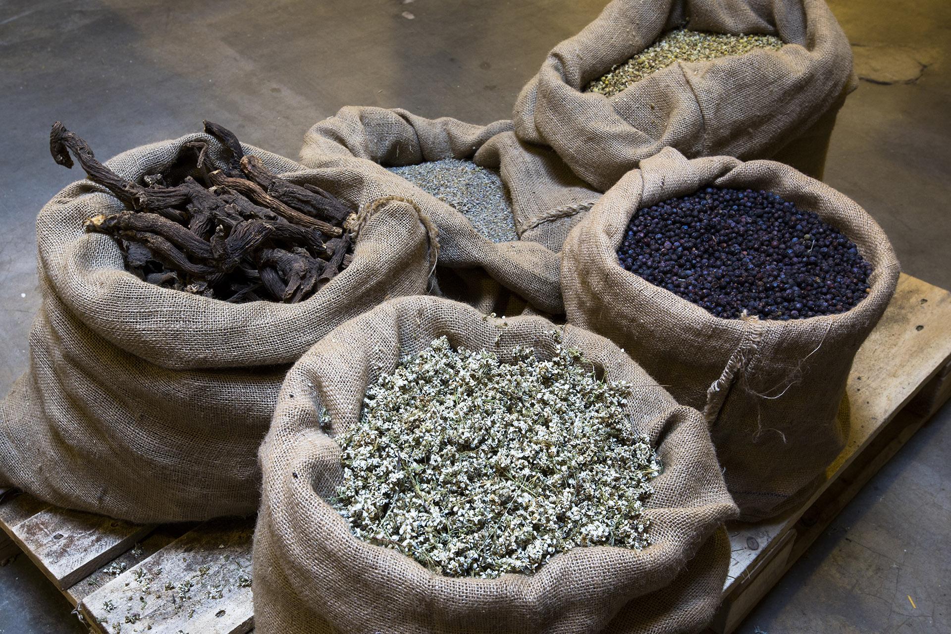 Herbs for making liquor Amaro Braulio, Italy
